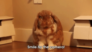 the-absolute-best-posts:good boy: Smile for the camera the-absolute-best-posts:good boy