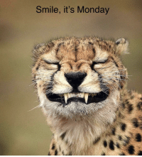 Its Monday: Smile, it's Monday
