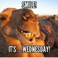 Its Wednesday: SMILE!  ITS. WEDNESDAY!
