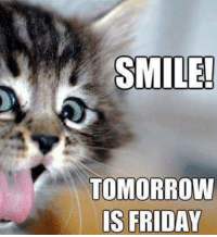 Cat lovers welcome, LIKE us at The Purrfect Feline Page: SMILE!  TOMORROW  IS FRIDAY Cat lovers welcome, LIKE us at The Purrfect Feline Page