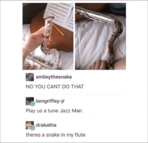 Snake, Jazz, and Tune: smileythesnake  NO YOU CANT DO THAT  kengriffey-jr  Play us a tune Jazz Man  drakatha  theres a snake in my flute there's a flute in my snake