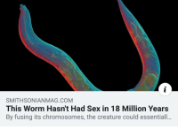Me irl: SMITHSONIANMAG.COM  This Worm Hasn't Had Sex in 18 Million Years  By fusing its chromosomes, the creature could essentiall.. Me irl