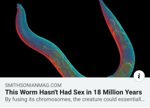 Me irl by Torpedoklaus MORE MEMES: SMITHSONIANMAG.COM  This Worm Hasn't Had Sex in 18 Million Years  By fusing its chromosomes, the creature could essentiall.. Me irl by Torpedoklaus MORE MEMES
