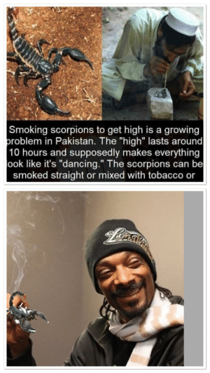 """Dancing, Smoking, and Yeah: Smoking scorpions to get high is a growing  problem in Pakistan. The """"high"""" lasts around  10 hours and supposedly makes everything  ook like it's """"dancing."""" The scorpions can be  smoked straight or mixed with tobacco or Hell yeah"""