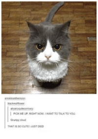 Cute, Cloud, and Humans of Tumblr: smokinonthemoon  blackwallflower;  airyairyquitecontrary  PICK ME UP. RIGHT NOW. I WANT TO TALK TO YOu.  Grumpy cloud  THAT IS SO CUTE I JUST DIED