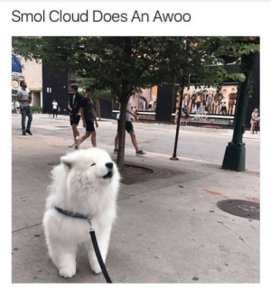 i love dogs so muchlook at him go: Smol Cloud Does An Awoo i love dogs so muchlook at him go