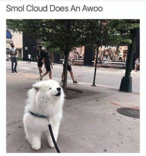 : Smol Cloud Does An Awoo  Il