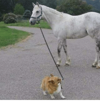 Memes, 🤖, and Dog: smoll dog takes big dog for a walk