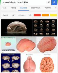 realshit wtf lit dankmemes shitpost: smooth brain no wrinkles  ALL NEWSMAGES SHPPING VIDEOSs  ALL  NEWS  IMAGES  latest gif clip art hd  if your brain aint 100% smooth  you can just get the hel ot  Howler monkey  Alonetta  Mouse brain  Human brain realshit wtf lit dankmemes shitpost