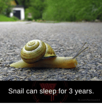 Snailed: Snail can sleep for 3 years.  fb.com/factsweird