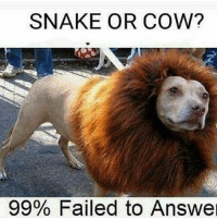 it's a whale: SNAKE OR COW?  99% Failed to Answe it's a whale