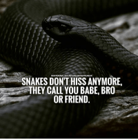 Memes, 🤖, and Hiss: SNAKES DON'T FUTURE. ENTREPRENEUR  HISS ANYMORE,  THEY CALL YOU BABE, BROa  OR FRIEND Beware of such snakes..... thefutureentrepreneur
