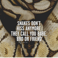 Club, Memes, and Snakes: SNAKES DON'T  HISS ANYMORE  THEY CALL YOU BABE,  BRO OR FRIEND  The Success Club Tag someone 🔥 thesuccessclub