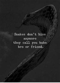 hiss: Snakes don't hiss  anymore  they call you babe  bro or friend.