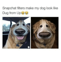This is hilarious 😂 (@hilarious.ted): Snapchat filters make my dog look like  Dug from Up This is hilarious 😂 (@hilarious.ted)