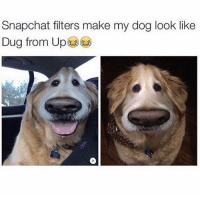 Memes, 🤖, and Filter: Snapchat filters make my dog look like  Dug from Up