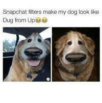 Memes, 🤖, and  Dug: Snapchat filters make my dog look like  Dug from Up Lmao 😂😂 @pmwhiphop