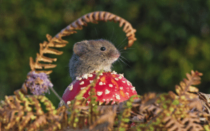Target, Tumblr, and Wow: snapdragonsoda: Who took this picture!?  This absolutely PERFECT picture???  It is just… so… perfect.  Distilled autumn pastoral fantasy.  The colorful mushroom, the curl of the fern and flowers, the muted background foliage, the beady eyes and precise whiskers of the tiny squeakbeast!!!  Unreal.  Wow.