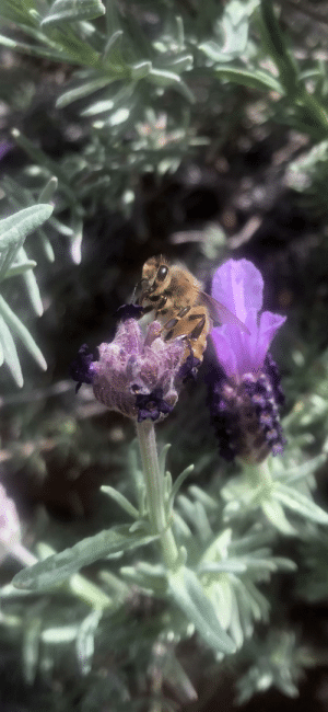 Snapped this little guy with my iPhone: Snapped this little guy with my iPhone