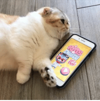 Snatch me and my fur-riends in our new game, @kitty_snatch! Unlock Luna and get 1500 kitty koins FREE! Use link in bio: Snatch me and my fur-riends in our new game, @kitty_snatch! Unlock Luna and get 1500 kitty koins FREE! Use link in bio