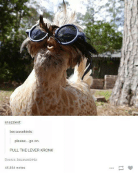 Kronk: snazziest:  becausebirds:  please go on  PULL THE LEVER KRONK  Source: becausebirds  45,854 notes