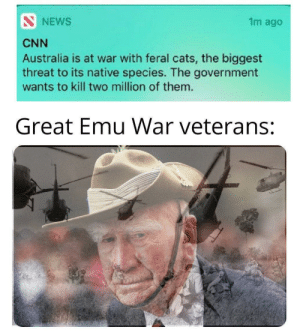 Cats, cnn.com, and Australia: SNEWS  1m ago  CNN  Australia is at war with feral cats, the biggest  threat to its native species. The government  wants to kill two million of them.  Great Emu War veterans: Goddamn birds