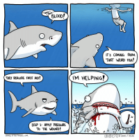 Poor shark just wanna help via /r/wholesomememes https://ift.tt/2MyPvol: SNIFF  BLO0D/  IT'S COMING FROM  THAT WEIRD FISH!  THEY REQUIRE fIRST AID!  'M HELPING?  0  STEP 1: APPLY PRESSURE  To THE WoUND!  JAMES oF NO TRADES.COM  GO。ジt @JAMES F REGAN Poor shark just wanna help via /r/wholesomememes https://ift.tt/2MyPvol