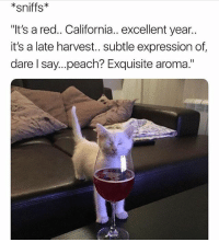 "Memes, California, and 🤖: *sniffs*  ""It's a red.. California.. excellent year..  it's a late harvest.. subtle expression of  dare l say...peach? Exquisite aroma."" 😻 goodgirlwithbadthoughts 💅🏼"