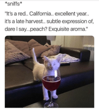"Memes, California, and 🤖: sniffs  ""It's a red.. California.. excellent year..  it's a late harvest.. subtle expression of  dare I say...peach? Exquisite aroma."" 😻 goodgirlwithbadthoughts 💅🏼"