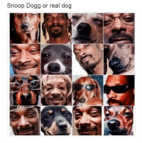 snoop dogg: Snoop Dogg or real dog