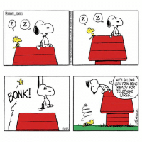 Telephone wire training snoopy snoopycomics cartoon comics woodstock: SNOOPY COMICS  BONK!  3-25  2 a  HES A LONG  WAY FROM BEN6  READY FOR  TELEPHONE  WIRES Telephone wire training snoopy snoopycomics cartoon comics woodstock