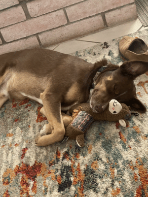 Snoozing with his llama friend: Snoozing with his llama friend
