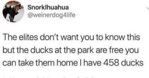 laughoutloud-club:  It's free real estate: Snorklhuahua  @weinerdog4life  The elites don't want you to know this  but the ducks at the park are free you  can take them home l have 458 ducks laughoutloud-club:  It's free real estate