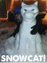 Do You Wanna Build a Snowman, Memes, and 🤖: SNOW CAT! Do you wanna build a snowman…..?  …nope, this is much better! ;)