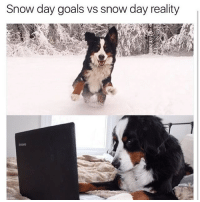 Memes, Brandy, and 🤖: Snow day goals vs snow day reality On a snow day, you most likely won't cash me outside..how bout dah! 🌨☃ rp @brandy_and_moose 🙌🏽 SoBasicICantEven snowday