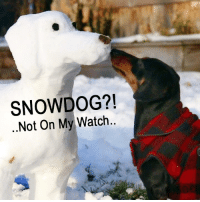 Memes, Snow, and 🤖: SNOW DOG?!  Not On My Watch Hey! That Snow Dog Shouldn't Be In My Yard!
