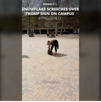 America, Ass, and Facebook: SNOWFLAKE scREECHES OVER  TRUMP SIGN ON CAMPUS  TRIGGERED! Get your raggedy ass on somewhere... I can't stand these kinds of liberals. The ones that literally yell and scream... goodness gracious 😓 liberalismisamentaldisorder trumpmemes liberals libbys democraps liberallogic liberal maga conservative constitution presidenttrump resist stupidliberals merica america stupiddemocrats donaldtrump trump2016 patriot trump yeeyee presidentdonaldtrump draintheswamp makeamericagreatagain trumptrain triggered CHECK OUT MY WEBSITE AND STORE!🌐 thetypicalliberal.net-store 🥇Join our closed group on Facebook. For top fans only: Right Wing Savages🥇 Add me on Snapchat and get to know me. Don't be a stranger: thetypicallibby Partners: @theunapologeticpatriot 🇺🇸 @too_savage_for_democrats 🐍 @thelastgreatstand 🇺🇸 @always.right 🐘 @keepamerica.usa ☠️ @republicangirlapparel 🎀 @drunkenrepublican 🍺 TURN ON POST NOTIFICATIONS! Make sure to check out our joint Facebook - Right Wing Savages Joint Instagram - @rightwingsavages