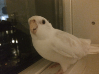 Target, Tumblr, and Blog: snowhitebirb: Could u get outa my person space pls