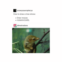 Tumblr, Drawings, and Monkey: snowy sauropter  How to draw a tree shrew:  Draw mouse  HUMAN EARS.  dimetrodone If you don't know what a proboscis monkey looks like... please look it up