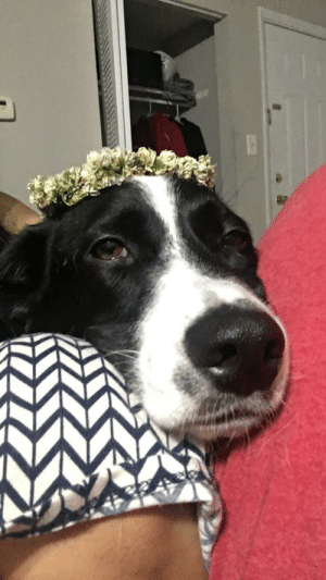 Flower, Crown, and Daddy: Snuggling between mommy and daddy with his flower crown