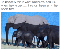 Time, Elephants, and Been: So basically this is what elephants look lik  when they're wet.. they just been ashy the  whole time....