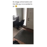 This made my day too much better (@girlwithnojob has the funniest memes ever): So doggy school exists and  this little guy is so excited to  go This made my day too much better (@girlwithnojob has the funniest memes ever)