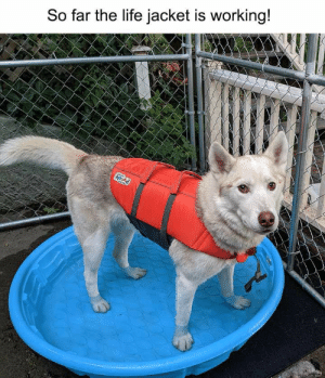 24 Funny Animal Pictures You Really Just Need To See For Yourself - JustViral.Net: So far the life jacket is working!  hound 24 Funny Animal Pictures You Really Just Need To See For Yourself - JustViral.Net