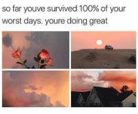 Anaconda, Never, and Great: so far youve survived 100% of your  worst days. youre doing great Keep going and never give up