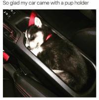 Funny, Pup, and Car: So glad my car came with a pup holder Should be a standard option 🙌🏻😍