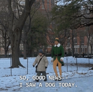 All day every day: SO GOOD NEWS  L SAW A DOG TODAY All day every day