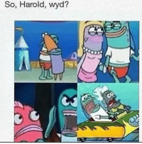Memes, Pussy, and Wyd: So, Harold, wyd? Do fishes call fish pussy fishy orrrr