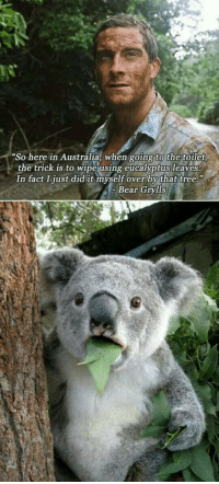 Australia, Bear, and Tree: So here in Australia, when going to the toilet  the trmcK IS to wipe using eucalyptus leaves.  In fact I just did it myself over by that tree.  Bear Grylls <p>If You Are Ever In Australia.</p>