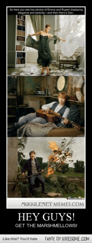 Hey Guys!http://omg-humor.tumblr.com: So here you see two photos of Emma and Rupert displaying  elegance and serenity-and then there's Dan.  menecente.com  MUGGLENET MEMES.COM  HEY GUYS!  GET THE MARSHMELLOWS!  TASTE OF AWESOME.COM  Like this? You'll hate Hey Guys!http://omg-humor.tumblr.com