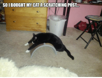 For more cute pics LIKE us at The Purrfect Feline Page: SO I BOUGHT MY CAT A SCRATCHING POST For more cute pics LIKE us at The Purrfect Feline Page